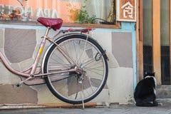 Gatto che aspetta alla casa della porta | Viaggio a Tokyo Giappone il 30 marzo 2017 Immagini Stock