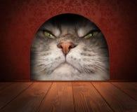 Gatto che aspetta in un foro del topo Grafico di concetto Fotografie Stock