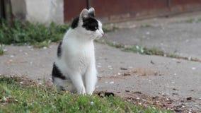 Gatto che cammina liberamente fuori stock footage