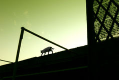 Gatto che cammina sul tetto immagine stock libera da diritti