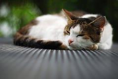 Gatto che cattura un pelo Fotografie Stock Libere da Diritti