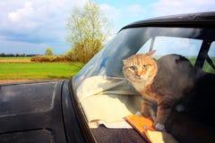 Gatto che cerca libertà Immagine Stock