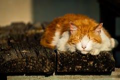 Gatto che dorme all'aperto Fotografia Stock Libera da Diritti