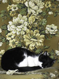 Gatto che dorme nella sedia delle nonne fotografia stock libera da diritti