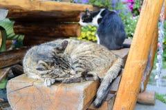 Gatto che dorme su un banco Fotografia Stock Libera da Diritti