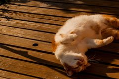 Gatto che dorme su una tavola fotografia stock libera da diritti