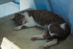 Gatto che dorme sul punto Fotografia Stock Libera da Diritti
