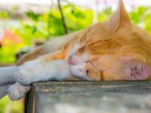 Gatto che dorme sulla parete Fotografia Stock