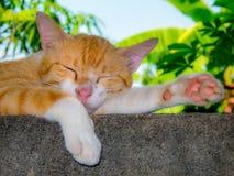 Gatto che dorme sulla parete Fotografia Stock Libera da Diritti