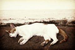 Gatto che dorme sulla terra Fotografie Stock Libere da Diritti
