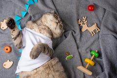 Gatto che dorme in una maglietta bianca con i giocattoli dei bambini su un plaid grigio Sogni dolci e sogni caldi, vista superior fotografia stock