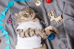 Gatto che dorme in una maglietta bianca con i giocattoli dei bambini su un plaid grigio Sogni dolci e sogni caldi, vista superior immagini stock