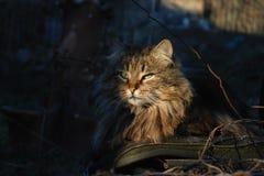 Gatto che esamina il tramonto Fotografia Stock