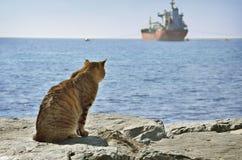 Gatto che esamina nave immagini stock libere da diritti