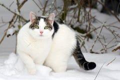 Gatto che fissa alla macchina fotografica in giardino di inverno Fotografie Stock Libere da Diritti