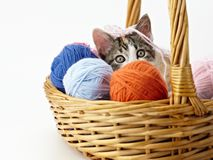 Gatto che gioca con il filato Fotografia Stock