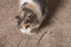 Gatto che gioca con la stringa fotografia stock