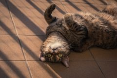 Gatto che gioca su un balcone Fotografia Stock Libera da Diritti