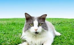 Gatto che gioca sulla fine dell'erba in su Immagine Stock Libera da Diritti