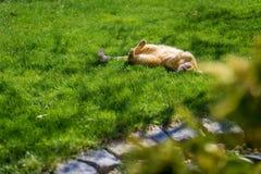 Gatto che gode del sole in giardino immagini stock