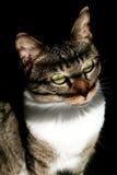 Gatto che gode della luce solare calda Fotografie Stock