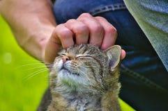 Gatto che gode di un picchiettio sulla testa immagini stock libere da diritti