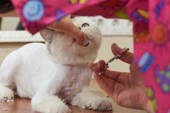 Gatto che governa vicino su Fotografia Stock