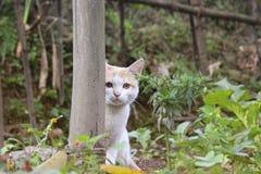 Gatto che guarda da dietro un palo Immagine Stock