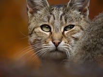 Gatto che guarda indietro immagine stock libera da diritti