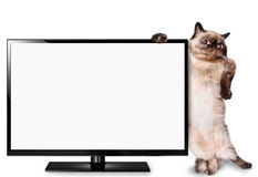 Gatto che guarda TV Fotografia Stock
