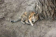 Gatto che ha resto sulla terra Fotografia Stock Libera da Diritti