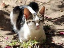 Gatto che ha un sunbath della molla in un giardino Fotografie Stock Libere da Diritti