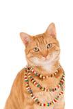 Gatto che indossa una collana Immagini Stock Libere da Diritti