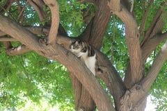 Gatto che insegue preda su un albero fotografie stock libere da diritti