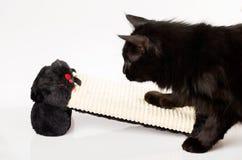 Gatto che insegue un topo Immagini Stock