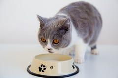 Gatto che mangia il suo alimento Fotografie Stock