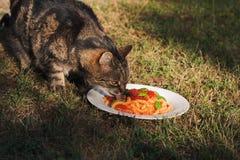 Gatto che mangia pasta immagine stock libera da diritti