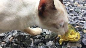 Gatto che mangia pesce sulla terra stock footage