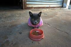 Gatto che mangia pranzo Immagine Stock Libera da Diritti