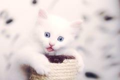 Gatto che mostra lingua Immagini Stock Libere da Diritti
