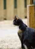 Gatto che osserva fuori del granaio Fotografia Stock Libera da Diritti