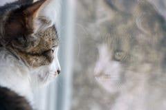 Gatto che osserva fuori la finestra immagini stock libere da diritti