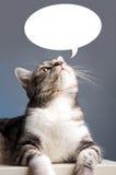 Gatto che osserva in su Fotografie Stock Libere da Diritti