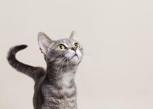 Gatto che osserva in su Immagine Stock Libera da Diritti