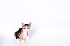Gatto che osserva in su Immagini Stock