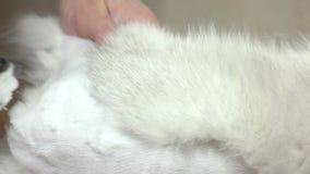 Gatto che ottiene fine di taglio di capelli su archivi video