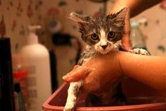 Gatto che ottiene un bagno Fotografie Stock Libere da Diritti