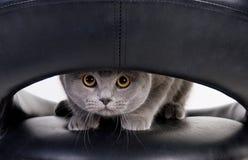 Gatto che pigola attraverso il foro Fotografia Stock Libera da Diritti