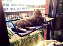 Gatto che pone davanti alla finestra Immagini Stock