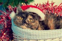 Gatto che porta il cappello di Santa Fotografia Stock Libera da Diritti
